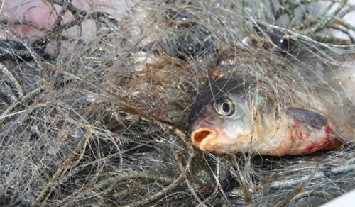За тиждень на Рівненщині зафіксовано 16 порушень правил рибальства