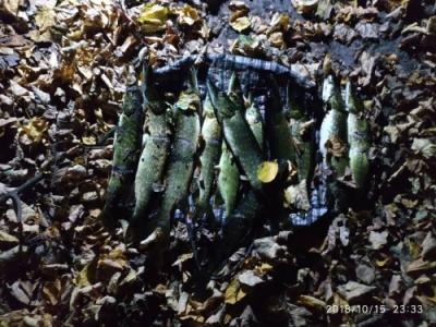 На Хрінницькому водосховищі порушник завдав збитків у розмірі 4 тис. грн, - рибоохоронний патруль Рівненщини