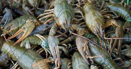 На річці Путилівка порушники завдали майже 4 тис. грн збитків, - Рівненський рибоохоронний патруль