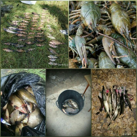 За півроку виявлено 507 порушень зі збитками 28 тис. грн, - Рівненський рибоохоронний патруль