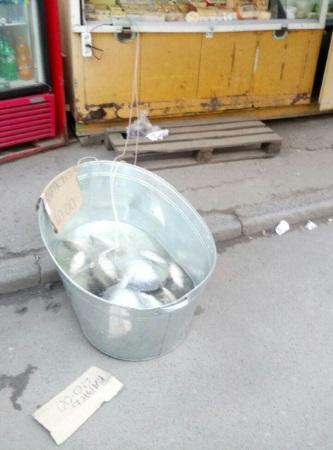 Рівненський рибоохоронний патруль викрив незаконний продаж риби